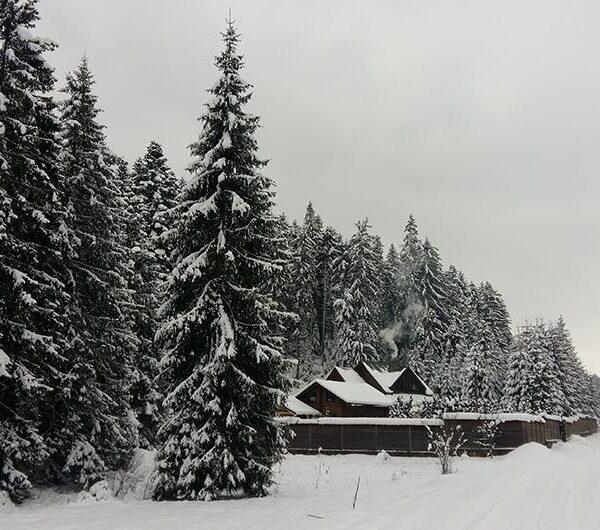 Карпатские горы отель Лесной маеток