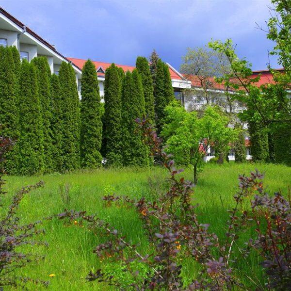 Саженцы в санатории Червона Калина