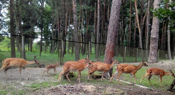 Мини зоопарк в санатории Шкло