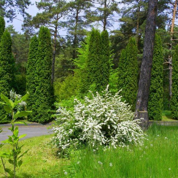 Лес на территории санатория Червона Калина